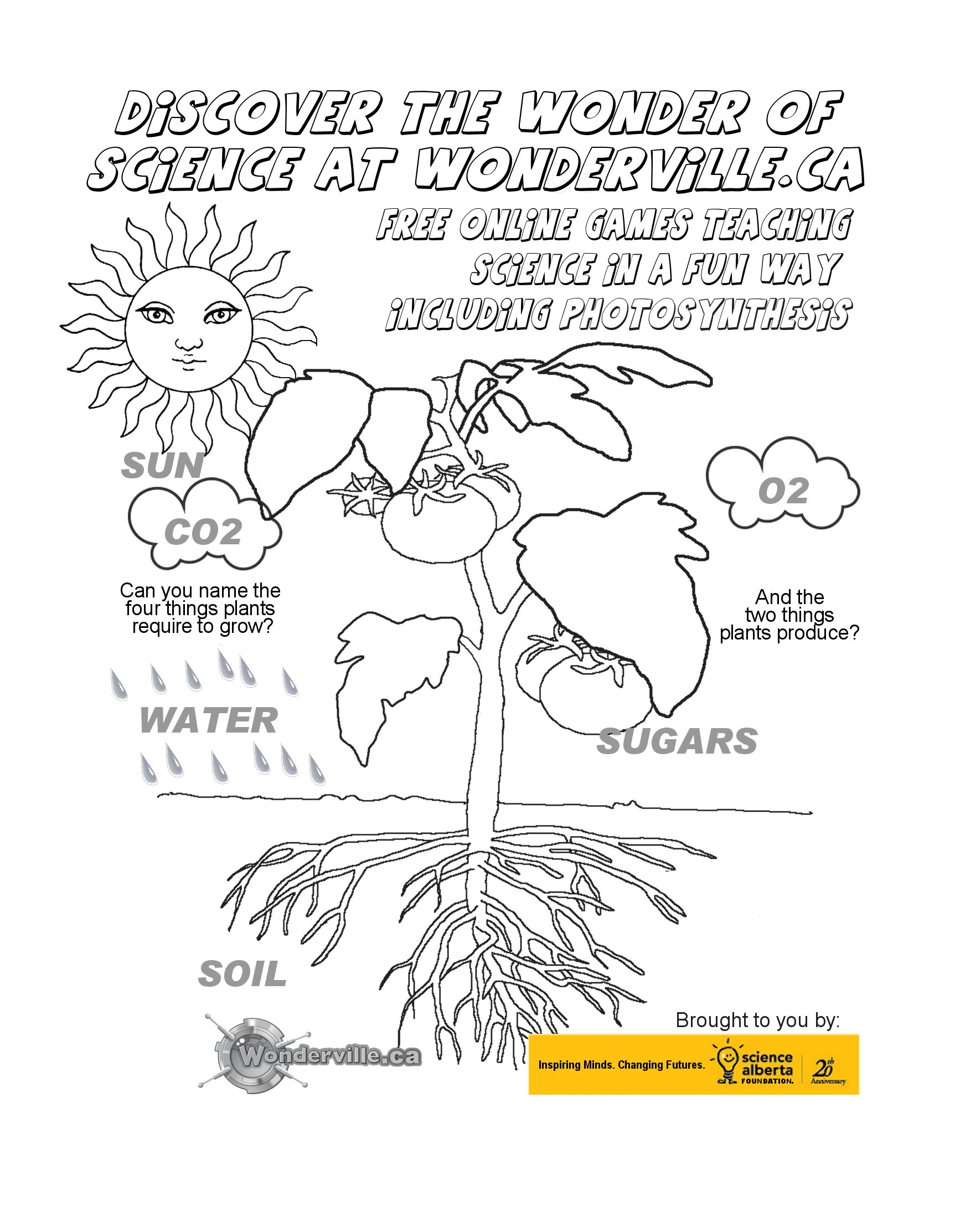 Kidsafe Puzzles – Photosynthesis Worksheets Kids
